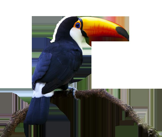 Toucan toucan1 goodies by sportcam for Accessoire salle de bain transparent
